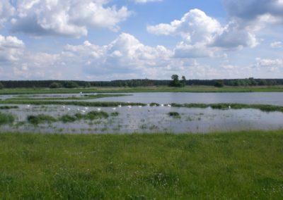 Geflutete Polderwiesen