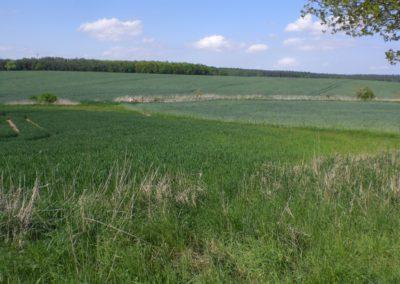 Feld in der Uckermakr